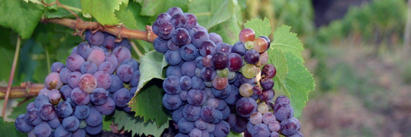 Alcantara and Winery tour